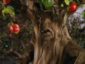 woz-trees