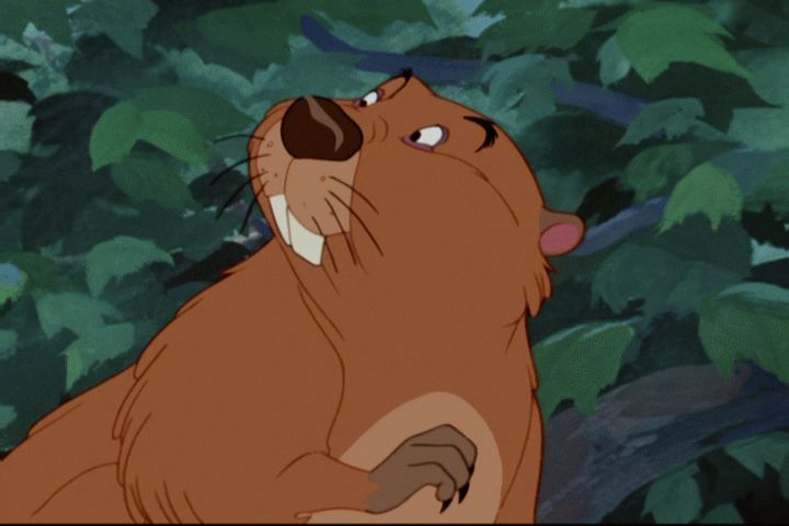 meet the beaver